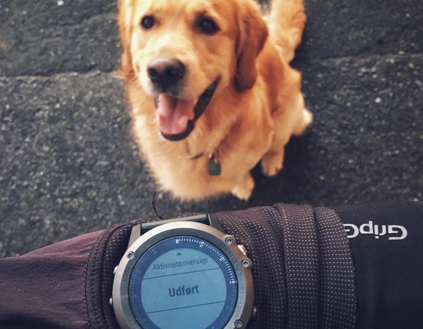 Løbetur med Hund