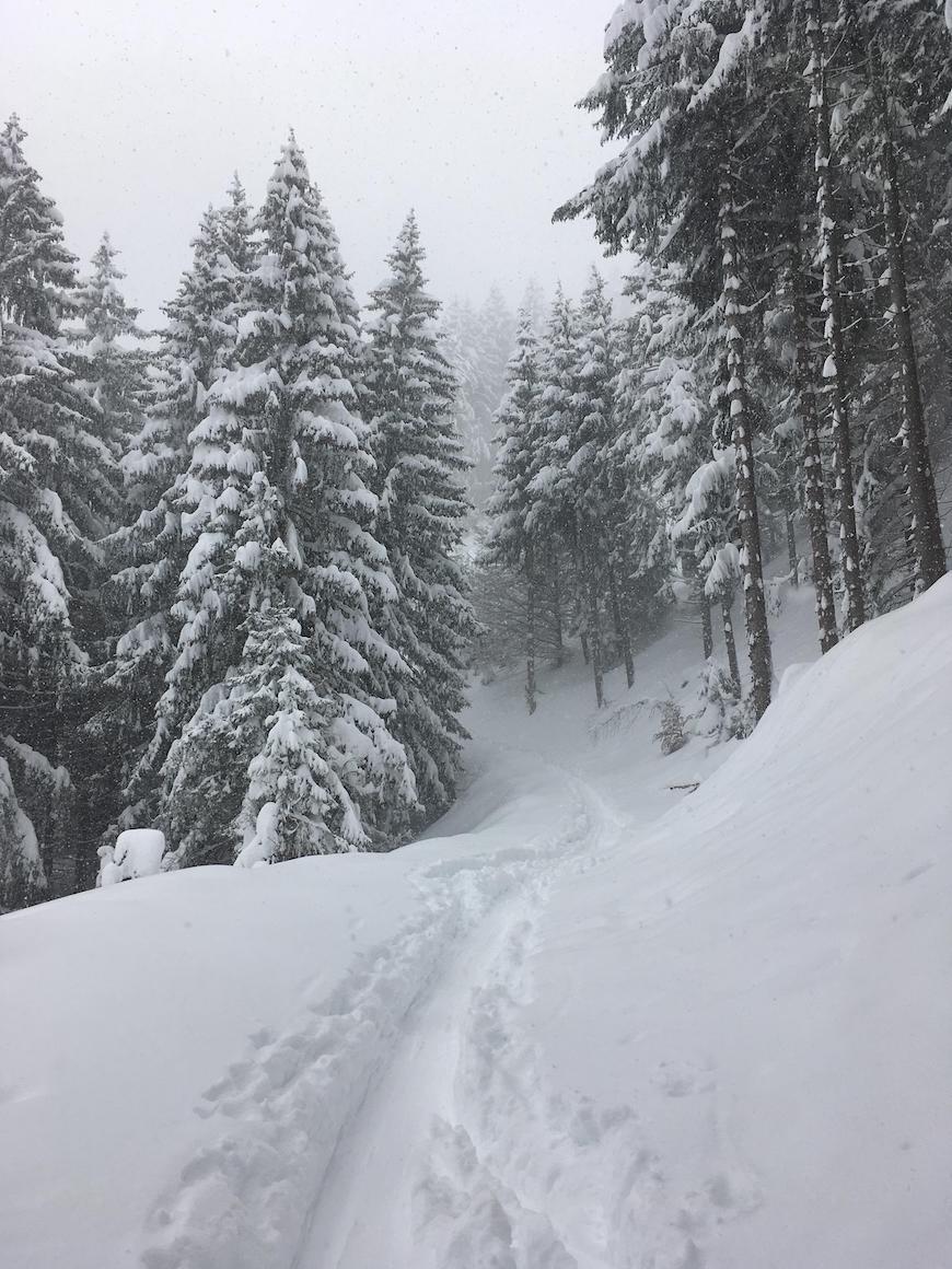 Saucony peregrine 8 ice sne